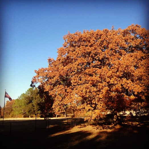 We enjoyed a beautiful fall.  This is my favorite tree at my parents' house.